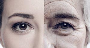 senescent cells aging