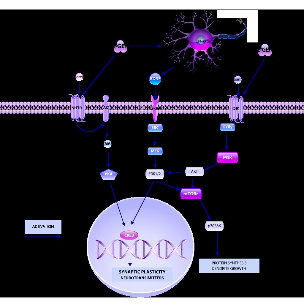 L-GEN pathway